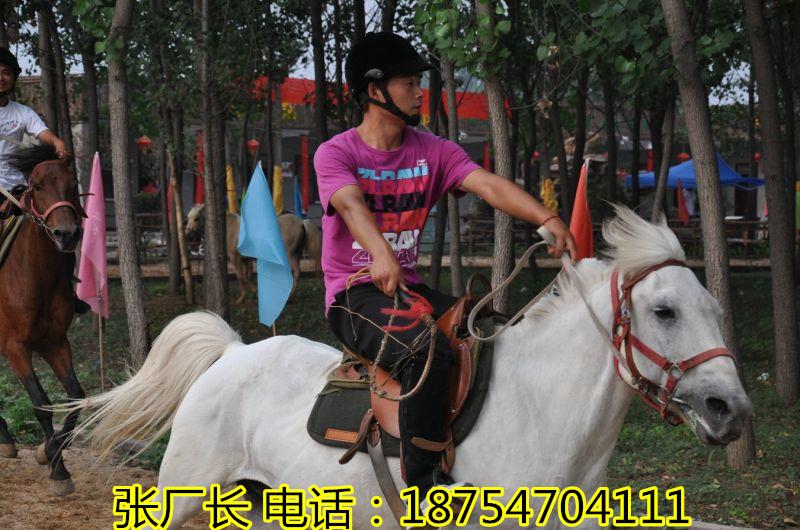 宠物小矮马价格 ¥宠物小矮马价格 美女骑矮马