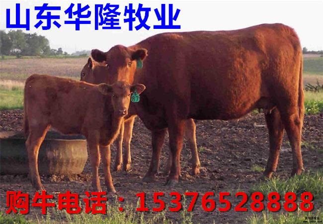 惠来龙泉山风景区介绍