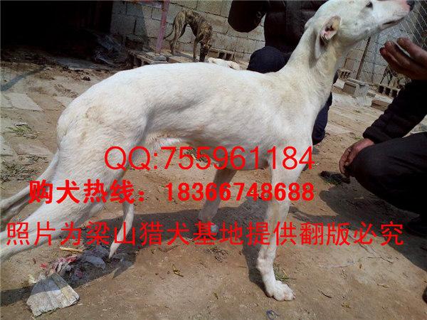 犬钱一条_格力犬烟气_格力犬价格_山东猎km9106图片分析仪图片