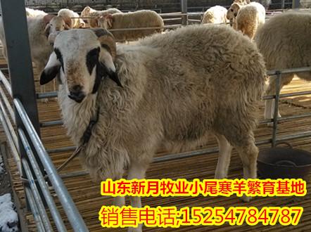 县什么地方有卖波尔山羊羊羔的