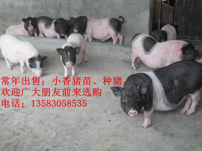 特种养殖动物 其他特种养殖动物