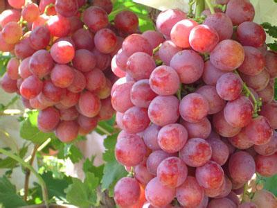 韩国葡萄进口报关代理公司