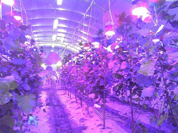 大棚补光灯价格_北京哪里有补光灯厂家温室蔬菜莴苣生长灯多少钱