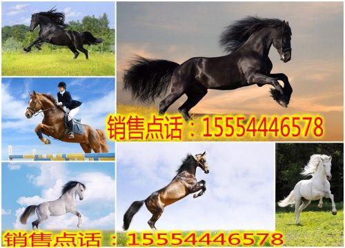 qq农场高级动物副产品