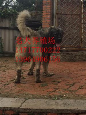 其他特种养殖动物     地址: 山东省济宁市梁山县 (特种牲畜养殖园)