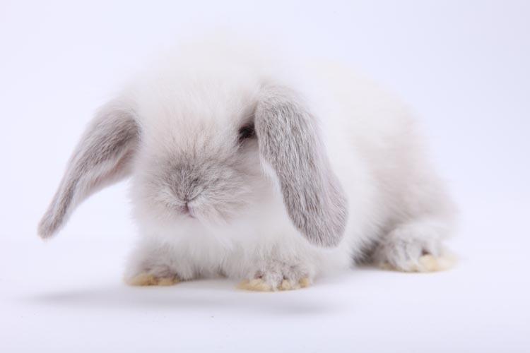 最可爱最小的公主兔