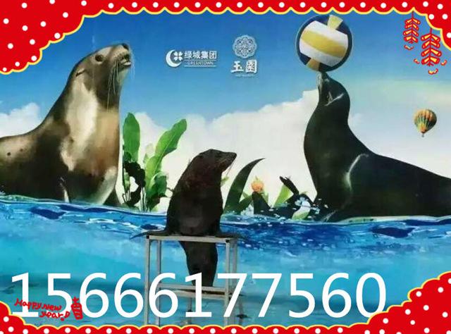 襄阳海狮(企鹅)出租哪里有 哪里有凭租企鹅(海豹)的