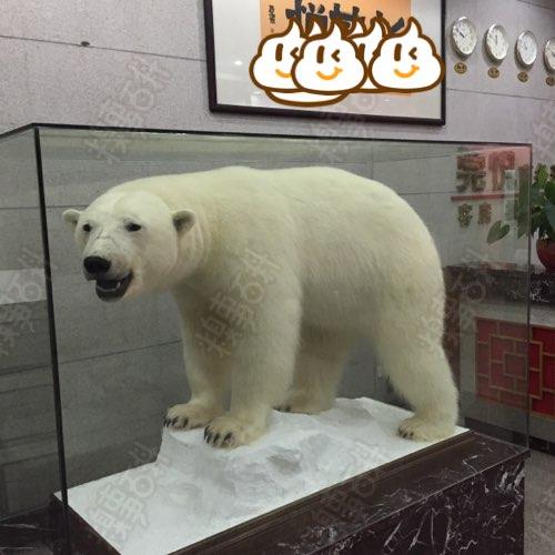 代理上海野生动物标本专业进口公司