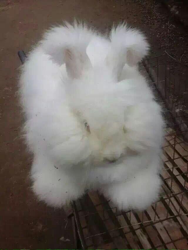 兔子的外形特点