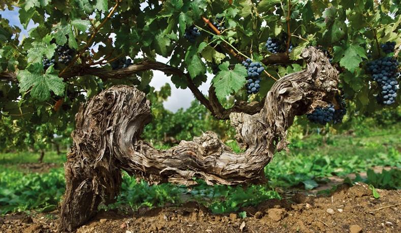 澳洲红酒进口报关公司
