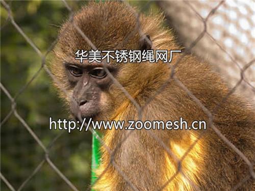 野生动物防护网,动物园防护网