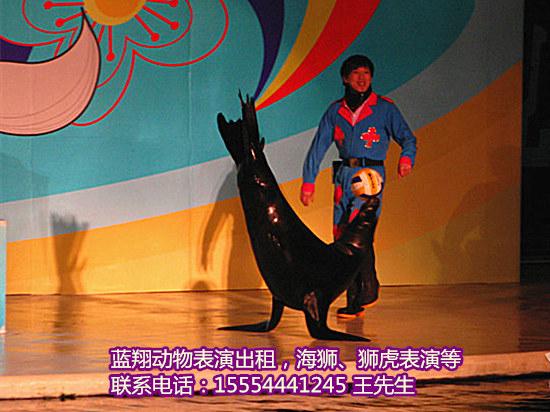马戏团表演,企鹅展览