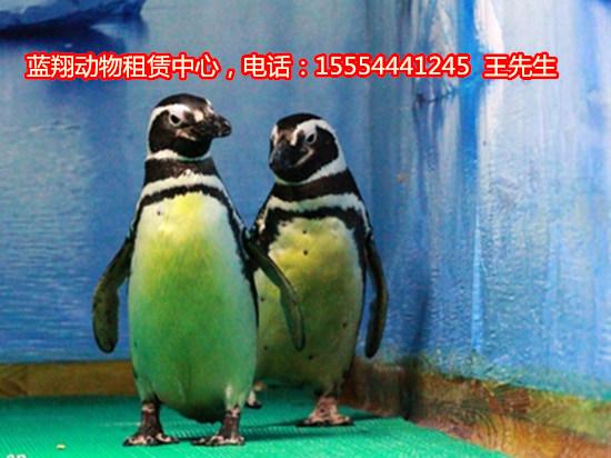 唐山羊驼出租-动物表演