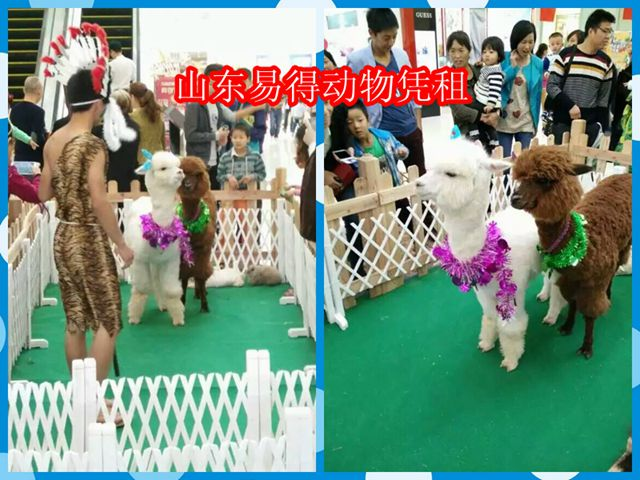 骆驼各类动物展示租赁】【动物马戏团