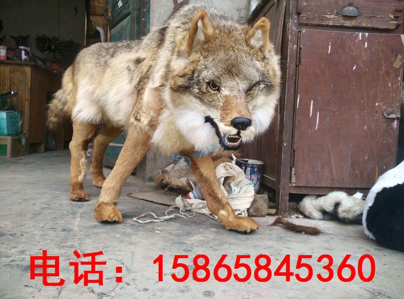 仿真雪狼北极狼模型动物狼标本