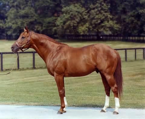 阿荣旗宠物矮马,矮马的价格山东汇众养马场