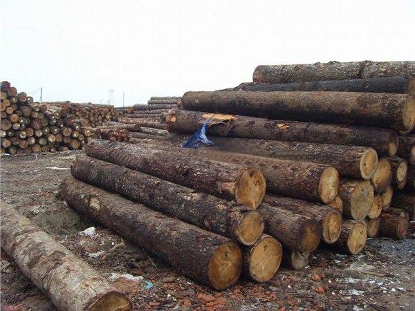 青岛港非洲木材清关服务