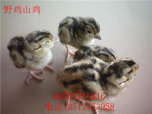孵化技术 种蛋从贮藏室取出后,要在孵化室内自然预热,待蛋表温度达到室温后即进行码盘入孵,码盘位置与贮存 时一致。另外,孵化机事先清洗、消毒、调试,并要预热。 翻蛋 在入孵后第 1-20 天,每隔 2-3 小时要翻蛋一次,每日翻蛋 8-12 次,翻转角度为 90 度,以使胚胎各部分 受热均匀,防止胚胎黏壳。如果孵化机内各处温差 0.