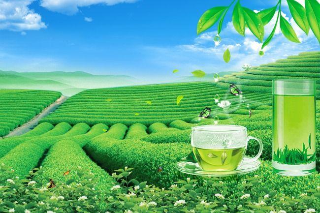 上海进口茶叶报关公司图片