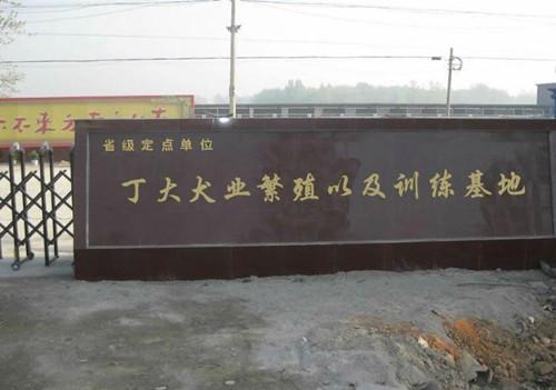 丁大犬业繁殖以及训练基地