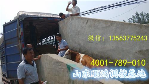 嘉祥县顺鸿牛羊养殖场Logo