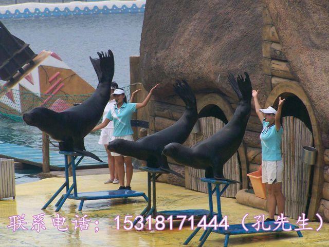 海狮表演出租#广东茂名_祥意动物凭租中心_商国互联网