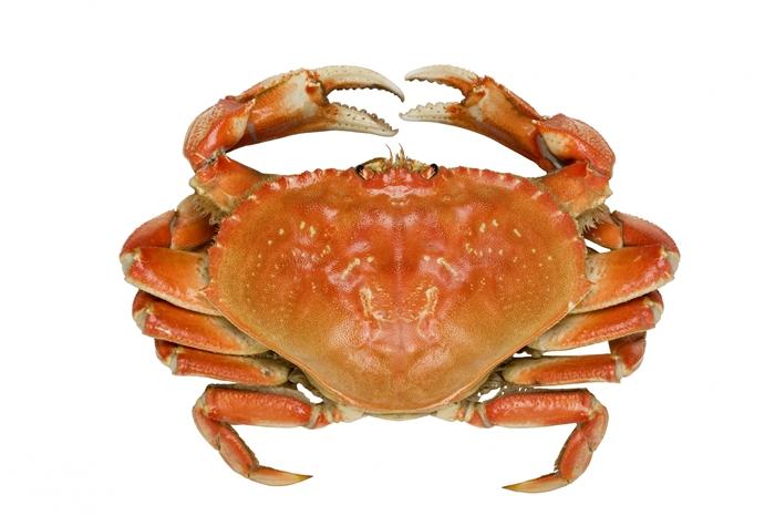 青岛冷冻螃蟹进口找专业代理清关团队