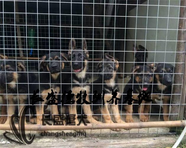 壁纸 动物 狗 狗狗 630_500