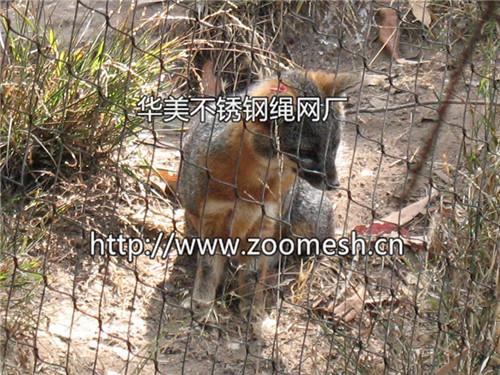 首屈一指的动物园围网是由华美提供