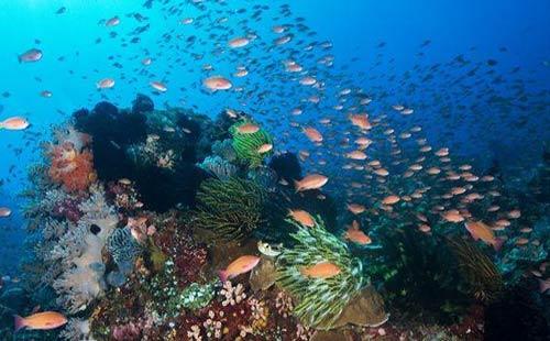 壁纸 海底 海底世界 海洋馆 水族馆 桌面 500_310