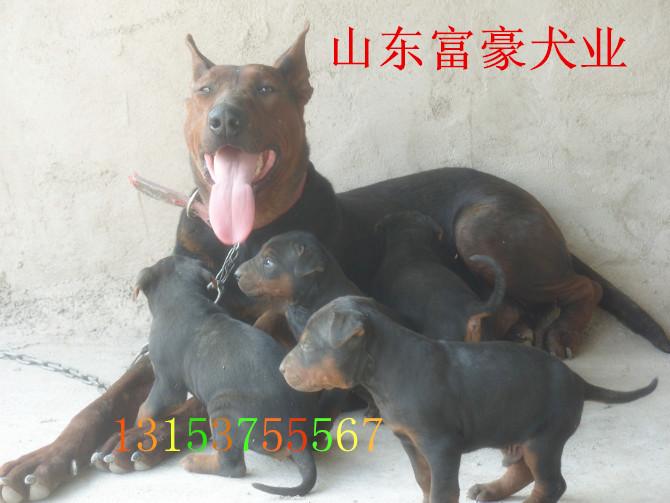 高等动物的生殖