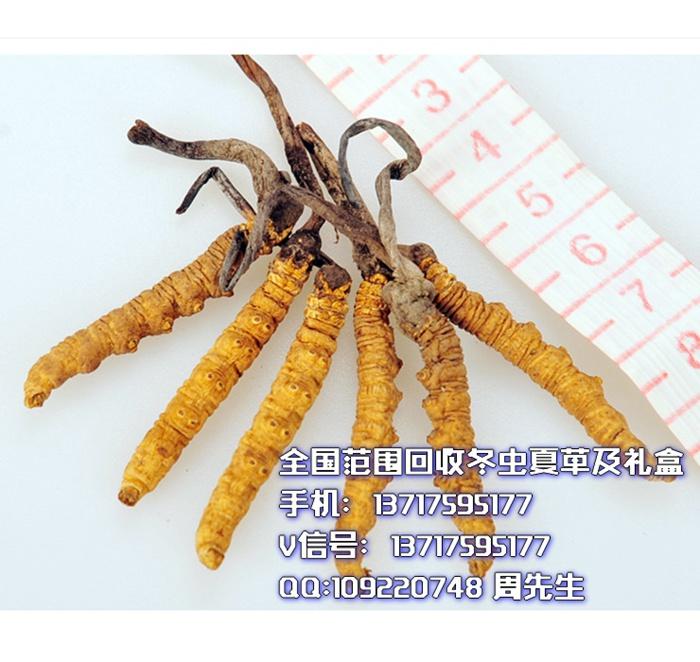 回收鹿茸北京冬虫夏草回收