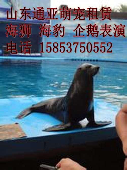 汕头哪里有出租海洋动物表演,海狮,海豹,企鹅