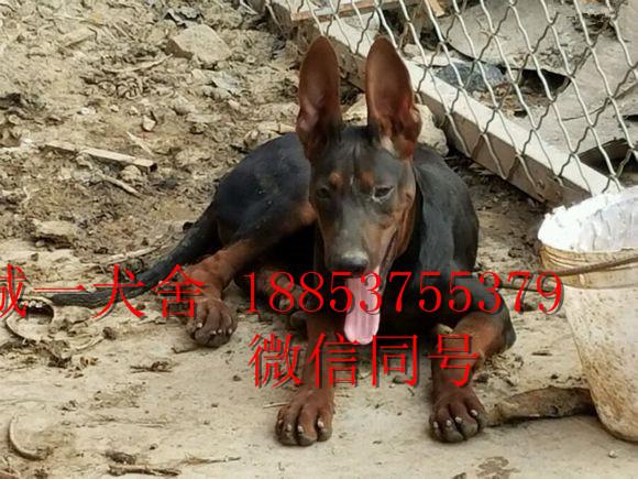 动物 狗 狗狗 580