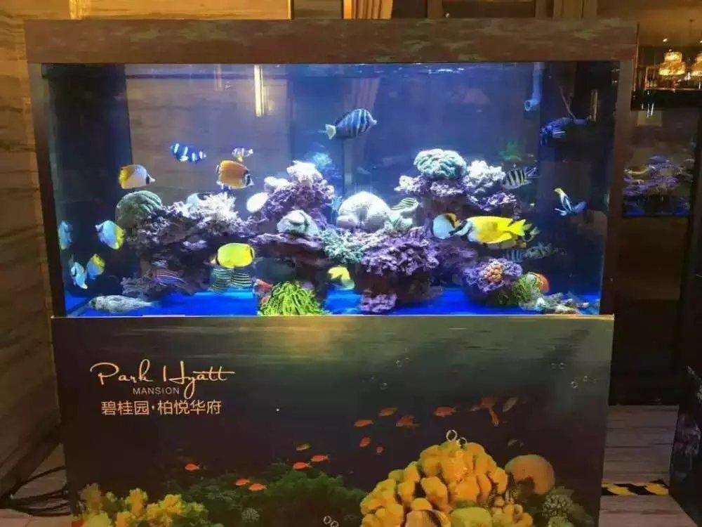 海洋生物展品租赁鱼缸展定制精彩海狮表演节目动物出租
