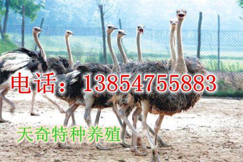 云南西双版纳观赏动物价格