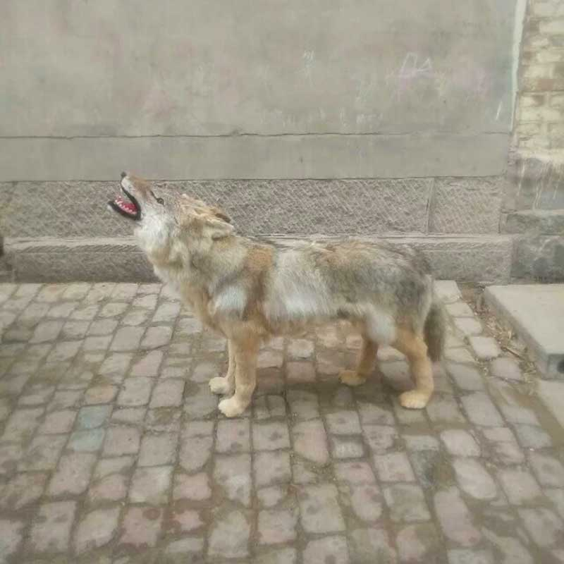 狼标本仿真蹲狼站狼各种姿势定制_菏泽皮毛动物工艺