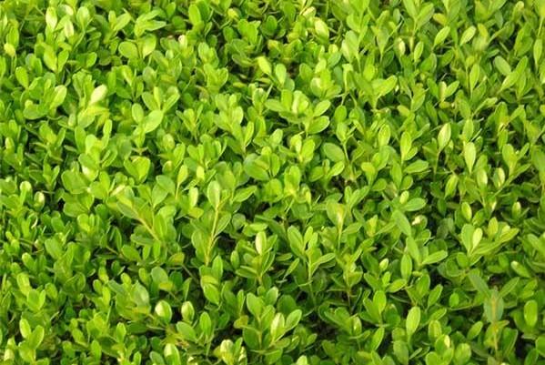 壁纸 成片种植 风景 植物 种植基地 桌面 599_401