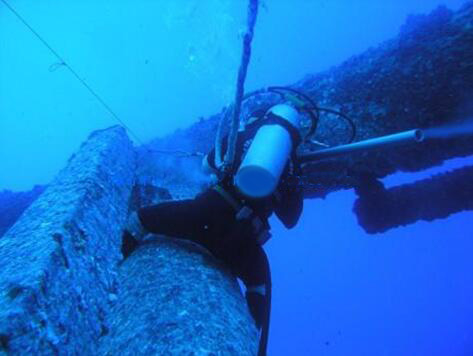 水下鱼图片素材