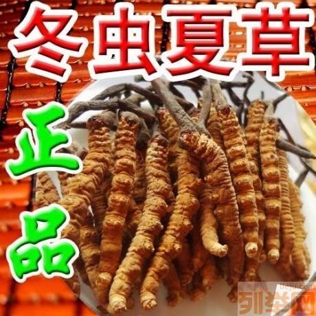 青藏川冬虫夏草礼品交易中心Logo