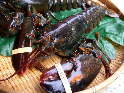 专业海鲜进口公司,进口海鲜品种:加拿大中华绒螯蟹,美国澳洲大龙虾