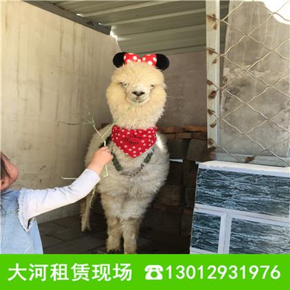 温州动物出租马戏团展览