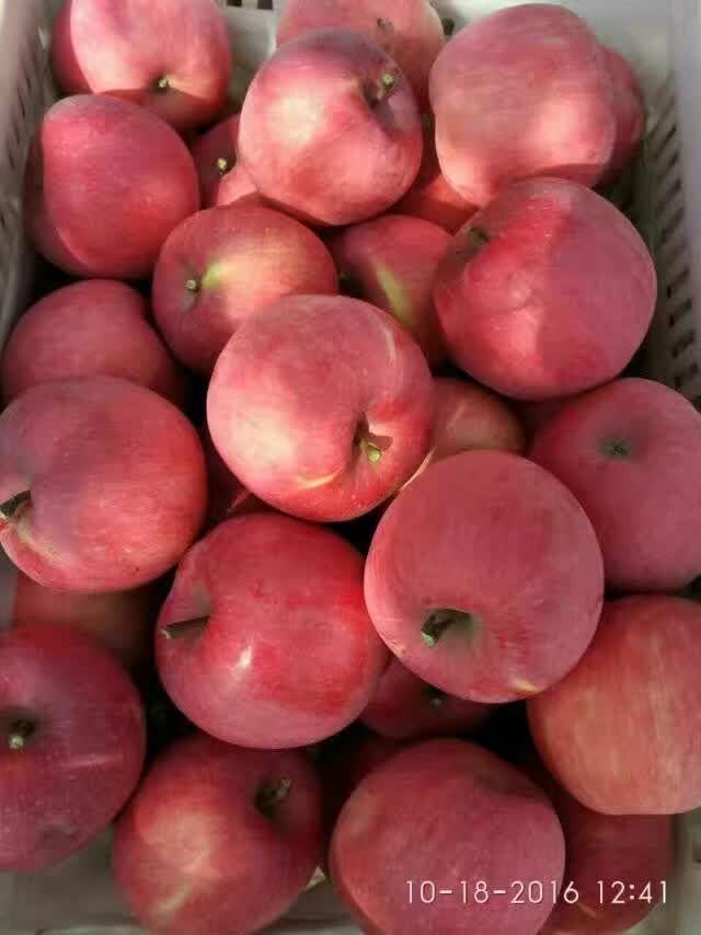 柱状苹果苗,红富士,烟富3号,6号,8山东秦冠苹果树苗多少钱一株适用于