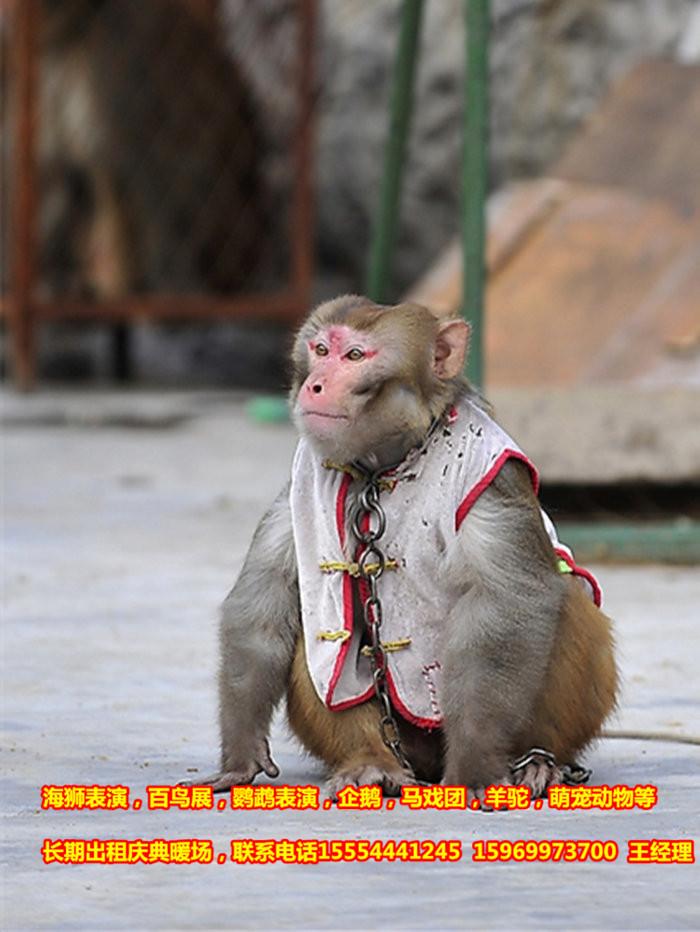 天 供 应 地:山东省济宁市 包装说明:呆萌可爱的动物