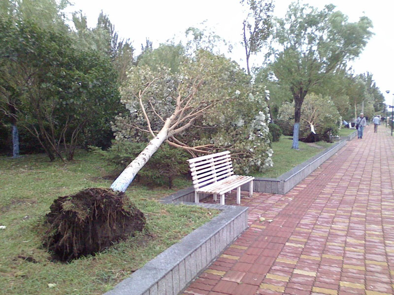 寻找回收拆迁树木/挖树/大树移植/园林树