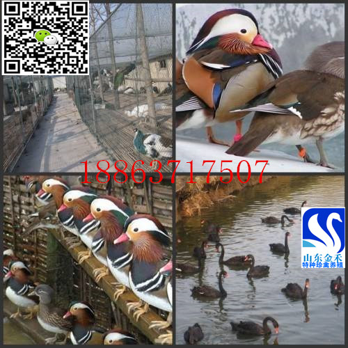 山东金禾特种珍禽养殖场