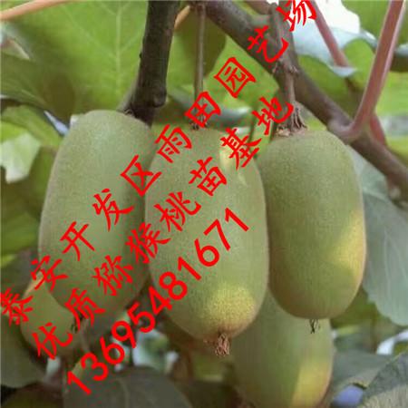 在苗高25-30厘米时摘心,具体时间因品种,需肥规律,树体生长结果状况而