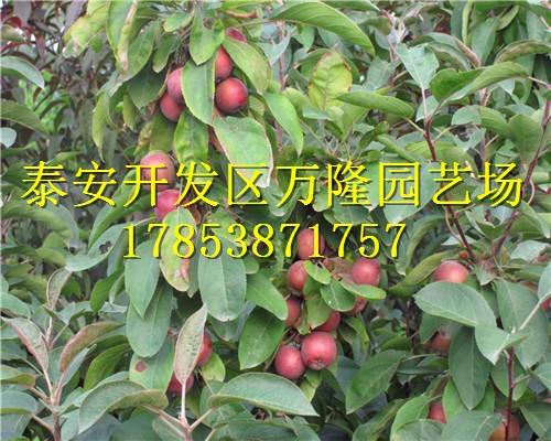 苹果树病虫害防治, 在树叶未开的草春使用0.