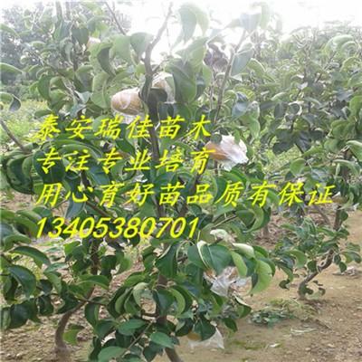 壁纸 成片种植 风景 植物 种植基地 桌面 400_400