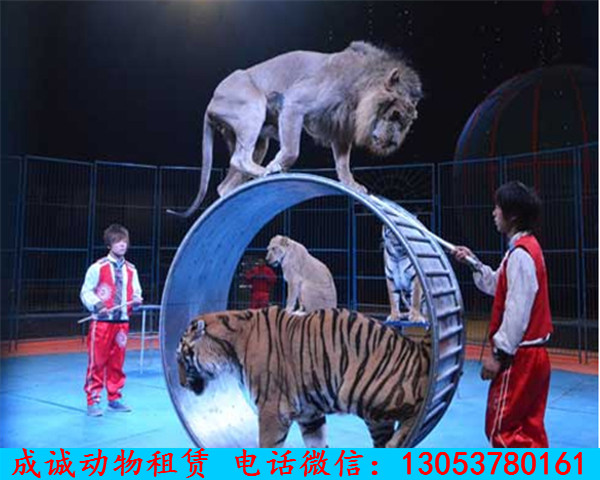 赣州市哪里出租动物马戏杂技表演
